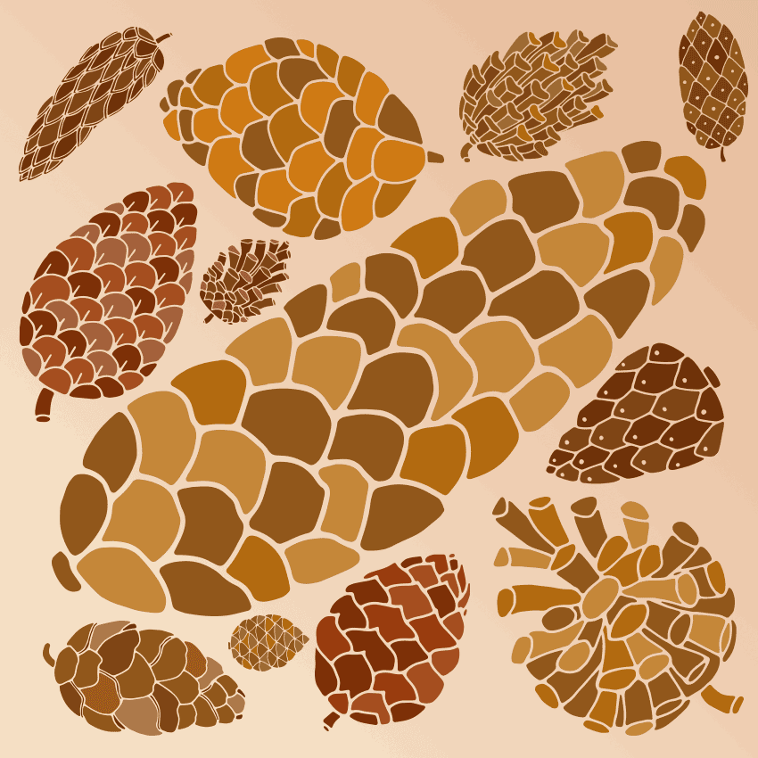 a variety of pine cones