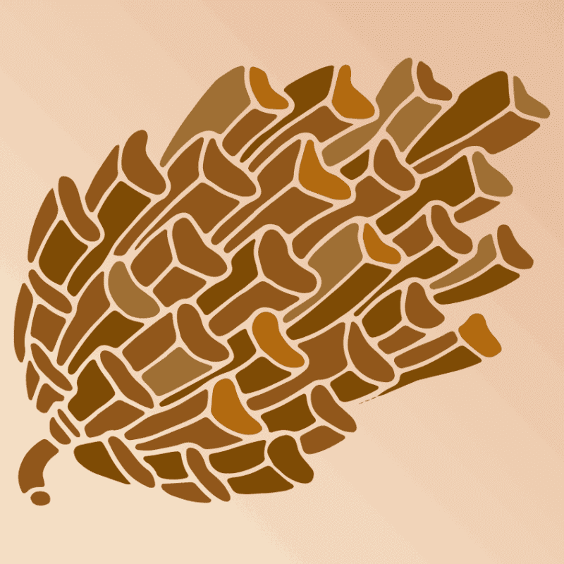 product shot of pine cone